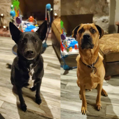 Our fur family is everything we'd hope for our future kids. Ike (the fun one) and Harvey (the sweet protector) turn Cullen's evenings into pure bliss while he plays fetch with Ike and runs around chasing Harvey while we cook dinner.