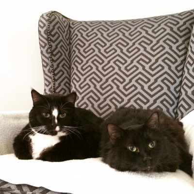We love our two kitties, Sister Molly and Captain Hook!
