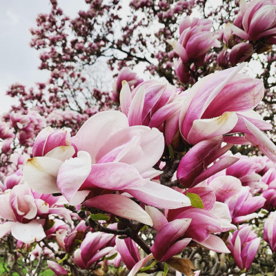 Spring - The weather starts to warm and the flowers in the park are breathtakingly beautiful!